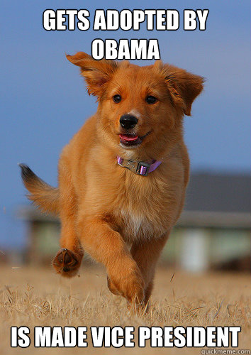 gets adopted by obama is made vice president - Ridiculously Photogenic Puppy