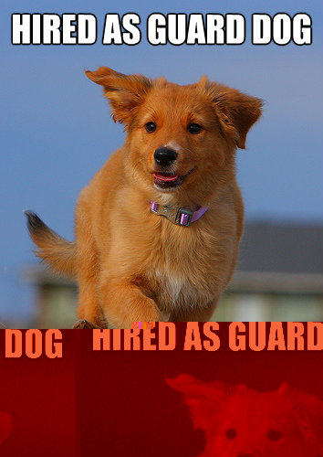 hired as guard dog by chuck norris - Ridiculously Photogenic Puppy