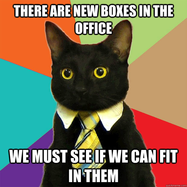 there are new boxes in the office we must see if we can fit  - Business Cat