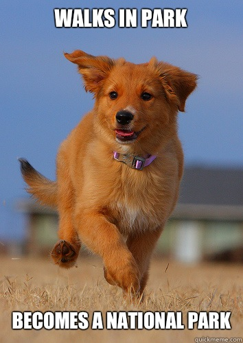 Walks in park Becomes national park - Ridiculously Photogenic Puppy