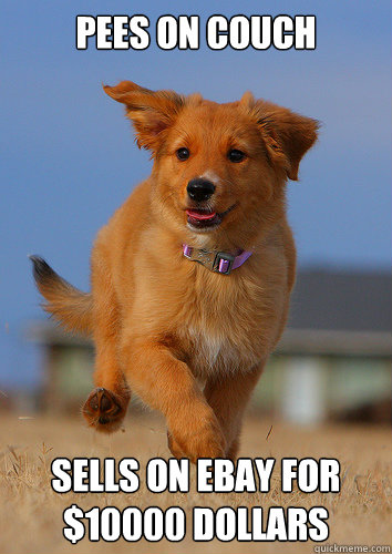 pees on couch sells on ebay for 10000 dollars - Ridiculously Photogenic Puppy
