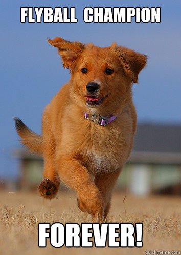 flyball champion forever - Ridiculously Photogenic Puppy