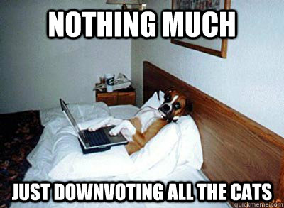 nothing much just downvoting all the cats - 