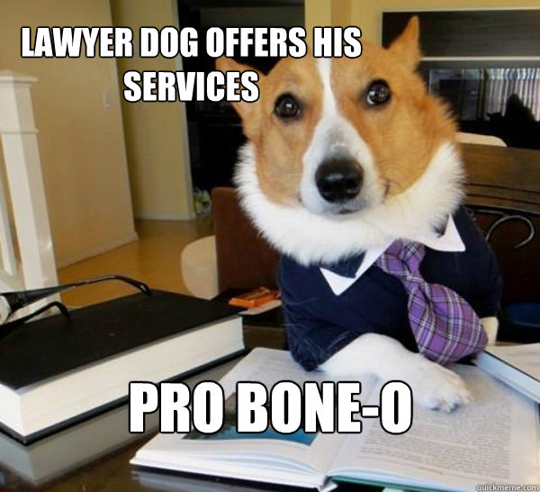 lawyer dog offers his services pro boneo - Lawyer Dog