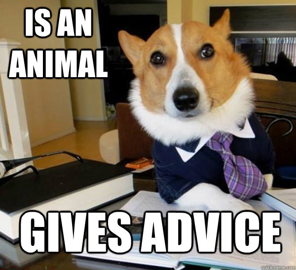is an animal gives advice - Lawyer Dog