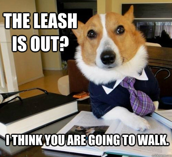 the leash is out i think you are going to walk - Lawyer Dog