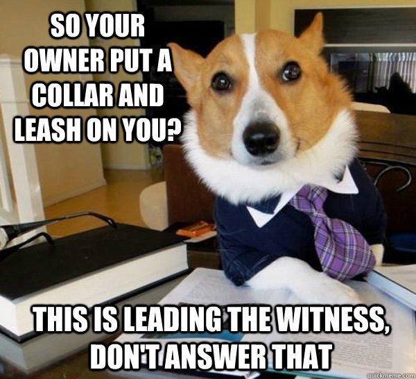 so your owner put a collar and leash on you this is leading - Lawyer Dog