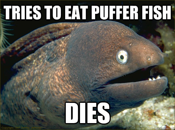 Cute puffer fish memes for What do fish eat