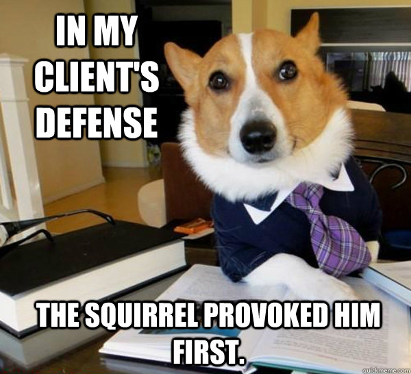 in my clients defense the squirrel provoked him first  - Lawyer Dog