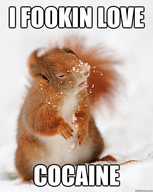 i fookin love cocaine  - cover squirrel