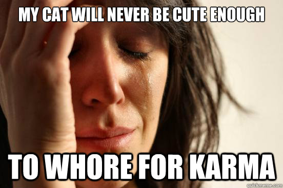 my cat will never be cute enough to whore for karma - First World Problems