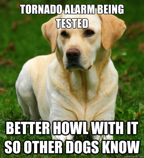 tornado alarm being tested better howl with it so other dogs - Dog Logic