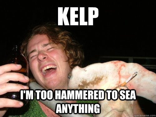 kelp im too hammered to sea anything - Hammered Hammer