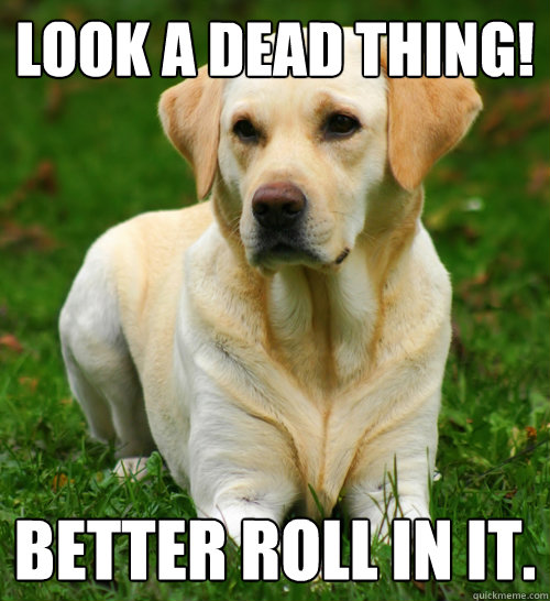look a dead thing better roll in it - Dog Logic
