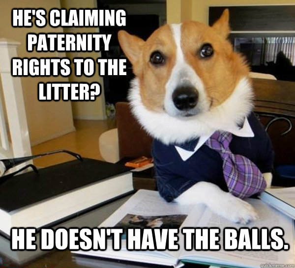 hes claiming paternity rights to the litter he doesnt hav - Lawyer Dog