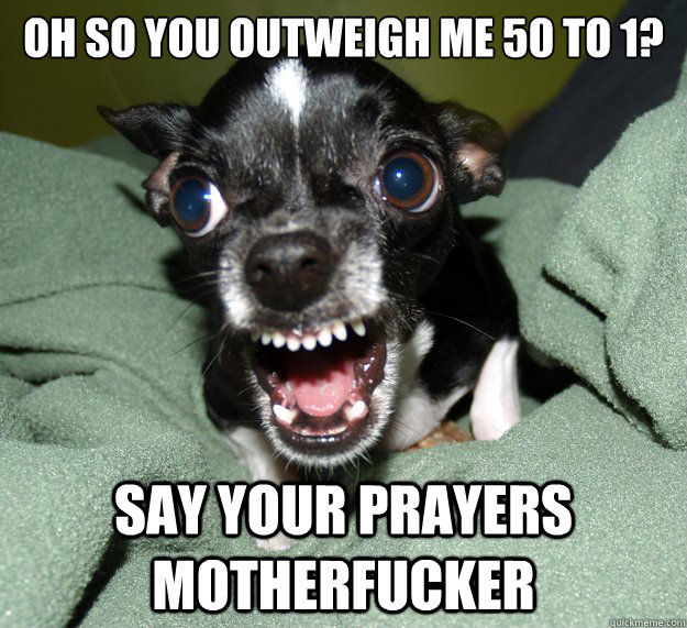oh so you outweigh me 50 to 1 say your prayers motherfucker - Chihuahua Logic