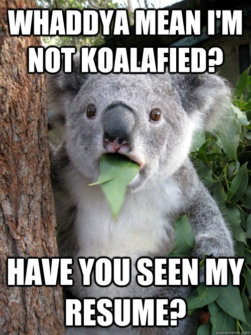 whaddya mean im not koalafied have you seen my resume - koala bear