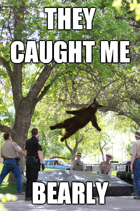 they caught me bearly - Boulder Bear