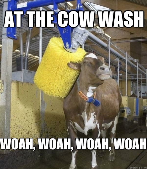 at the cow wash woah woah woah woah -