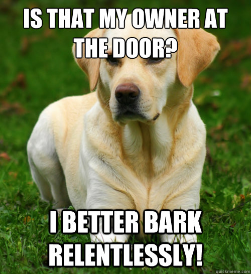is that my owner at the door i better bark relentlessly  - Dog Logic