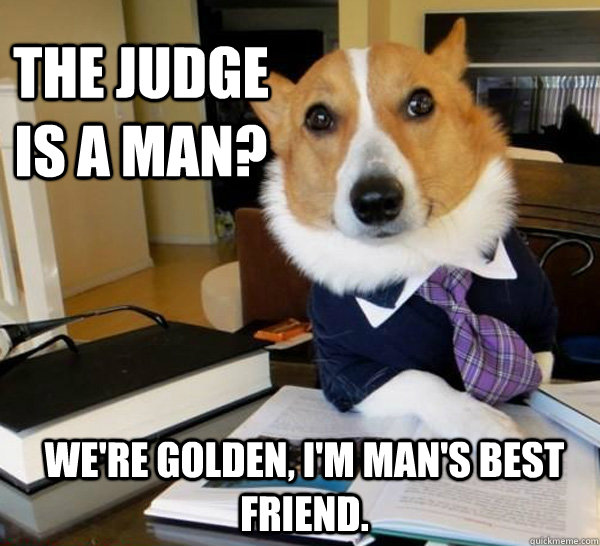 the judge is a man were golden im mans best friend  - Lawyer Dog