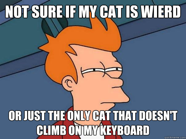 not sure if my cat is wierd or just the only cat that doesn - Futurama Fry