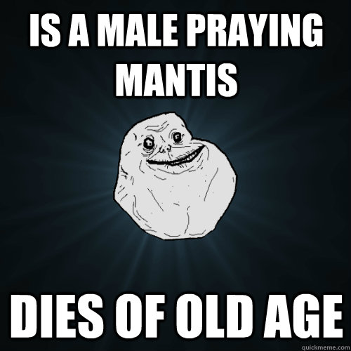 is a male praying mantis dies of old age - Forever Alone