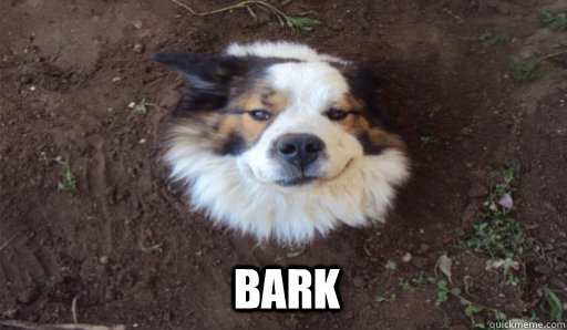 bark - Tree Dog