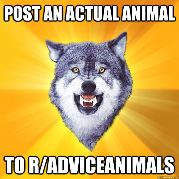 post an actual animal to radviceanimals - Courage Wolf