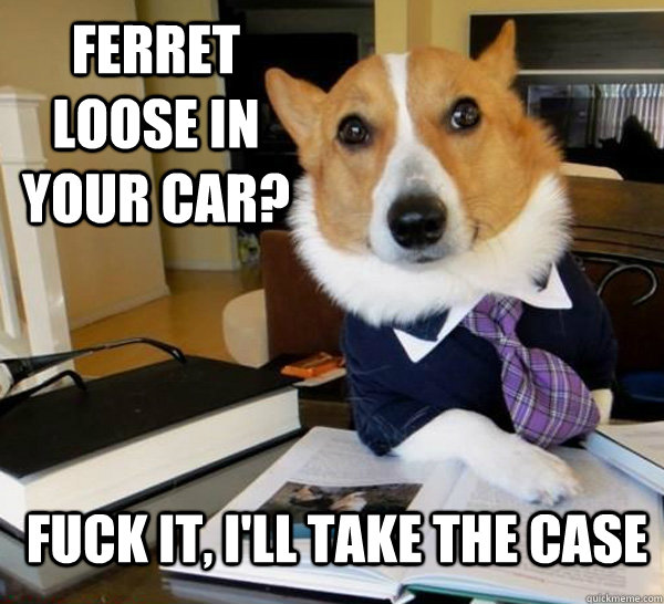 ferret loose in your car fuck it ill take the case  - Lawyer Dog
