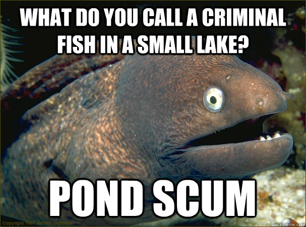 what do you call a criminal fish in a small lake pond scum - Bad Joke Eel