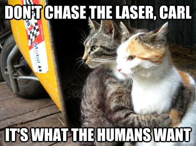 dont chase the laser carl its what the humans want - Restraining Cat