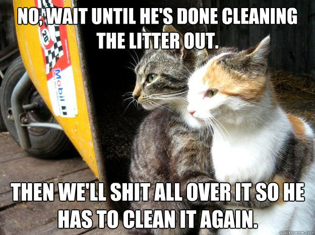 no wait until hes done cleaning the litter out then well - Restraining Cat