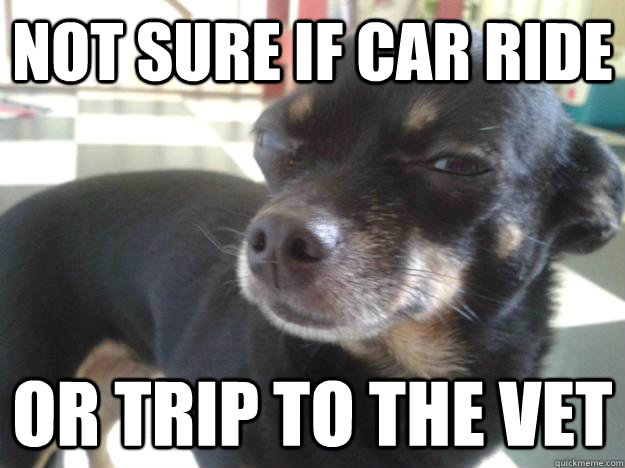 not sure if car ride or trip to the vet - 