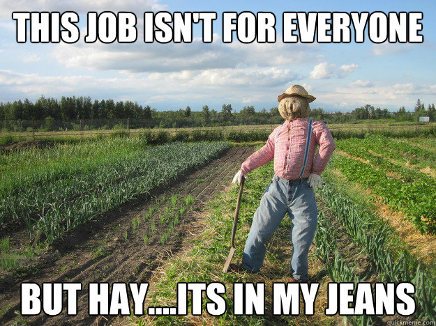 this job isnt for everyone but hayits in my jeans - Scarecrow