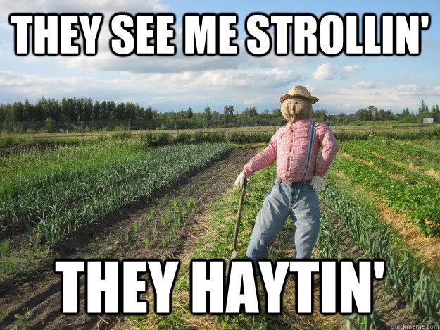 Scarecrow Memes