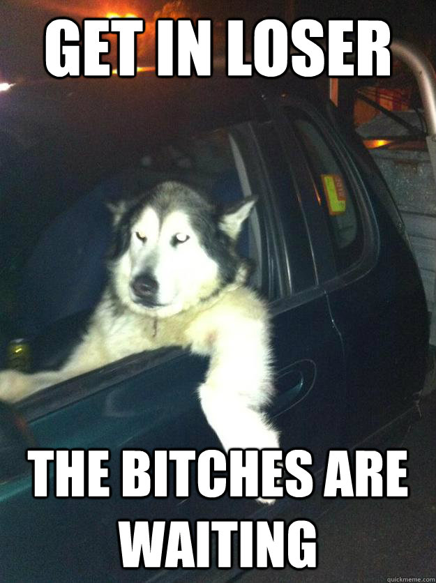 get in loser the bitches are waiting  - Mean Dog