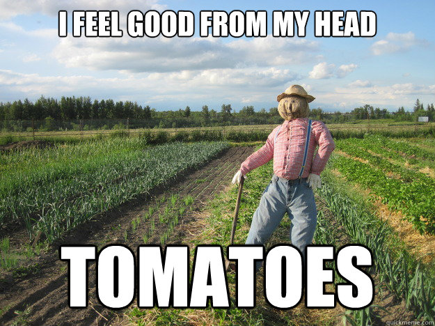 i feel good from my head tomatoes - Scarecrow