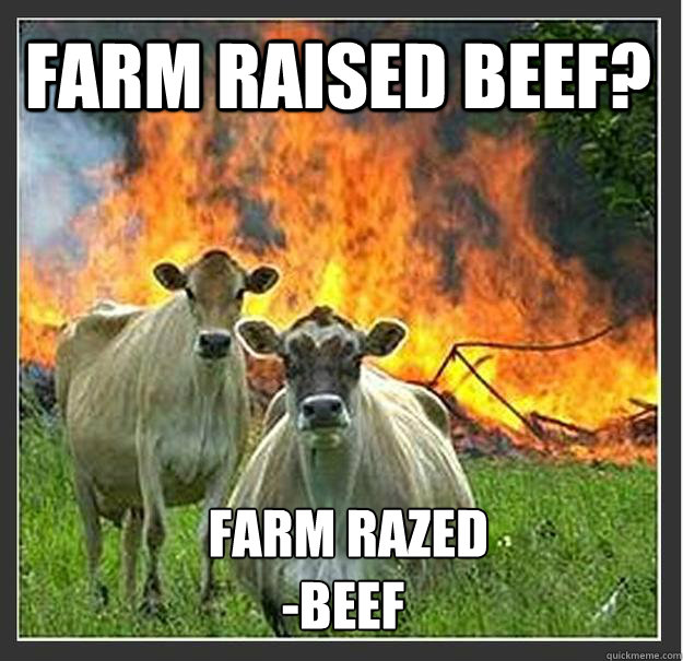 farm raised beef farm razed beef - Evil cows