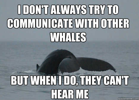 i dont always try to communicate with other whales but when - 