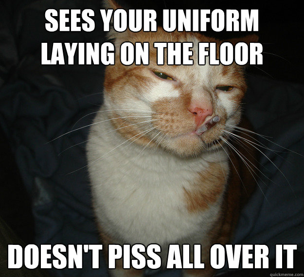 sees your uniform laying on the floor doesnt piss all over  - Cool Cat Craig