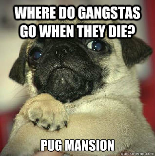 where do gangstas go when they die pug mansion - SMUG PUG