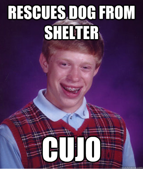 rescues dog from shelter cujo - Bad Luck Brian