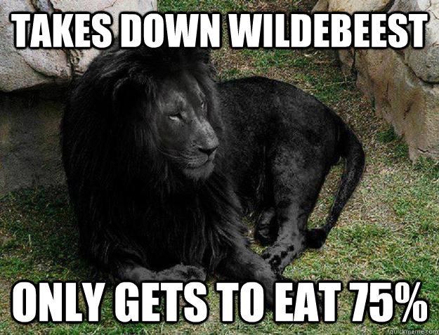 takes down wildebeest only gets to eat 75 - Black Lion Problems