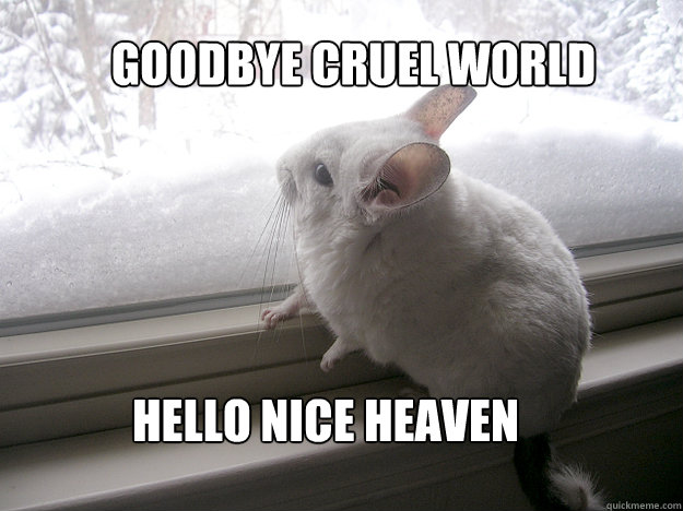goodbye cruel world hello nice heaven - lonely chinchilla