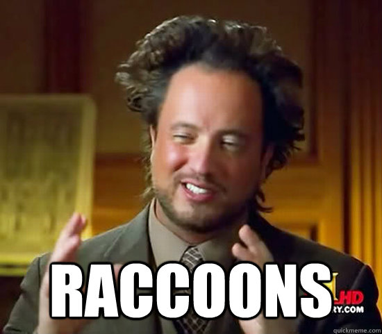 raccoons - Ancient Aliens