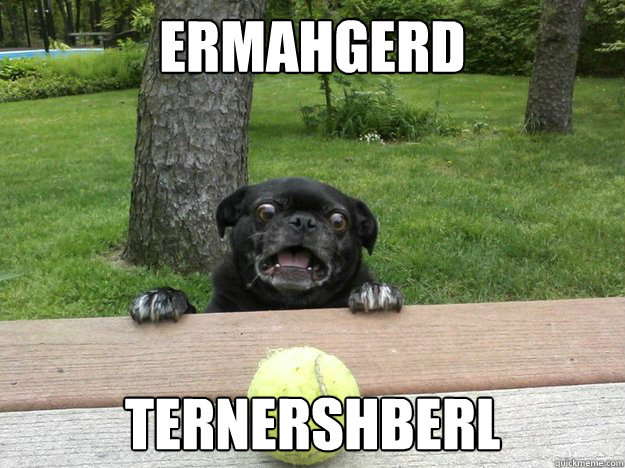 ermahgerd ternershberl - Berks Dog