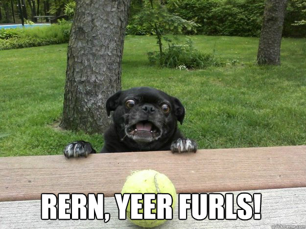 rern yeer furls - Berks Dog