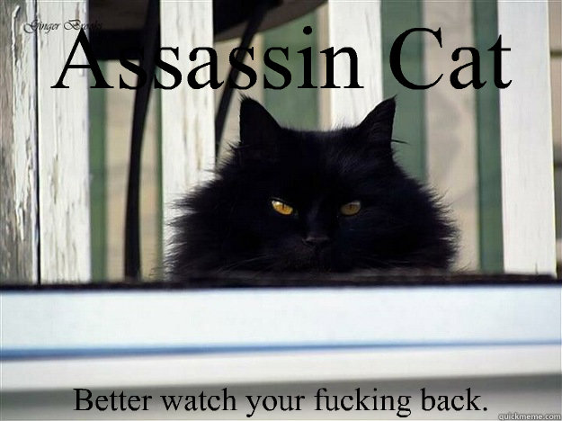 assassin cat better watch your fucking back - Assassin cat