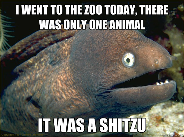 i went to the zoo today there was only one animal it was a - Bad Joke Eel